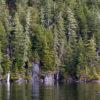 Big Goat Lake Forrest