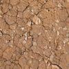 Dried Dirt